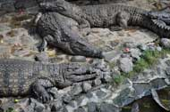 lazy crocs sleeping