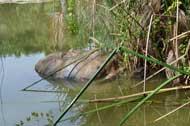 tortoise cooling off