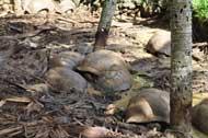 tortoise in mud
