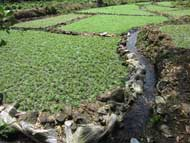 water canal in plantation field