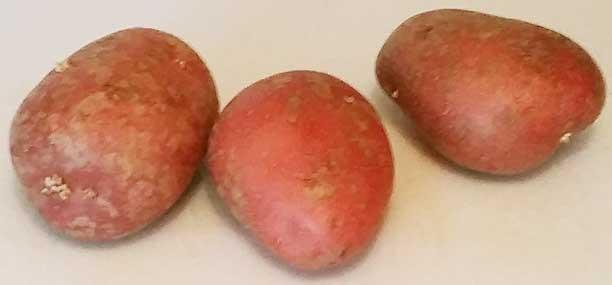 medium rooster potatoes