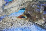 fish near rocks
