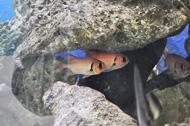 large eyed fish
