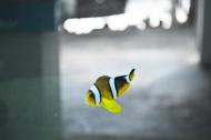 lone yellow fish